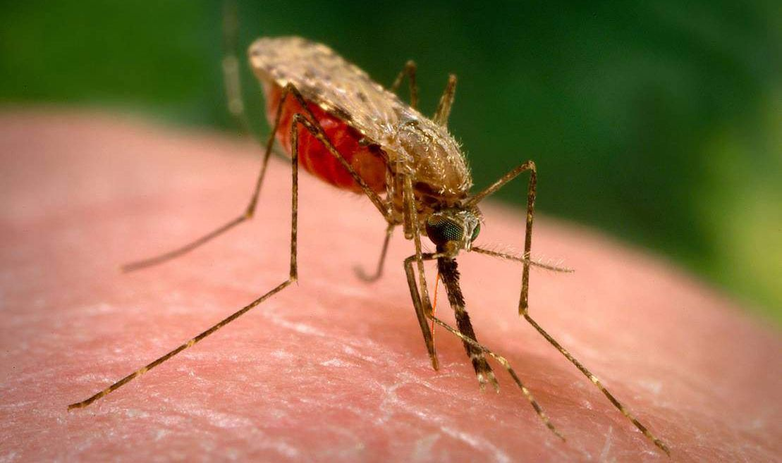 The malaria vaccine successfully passed clinical trials