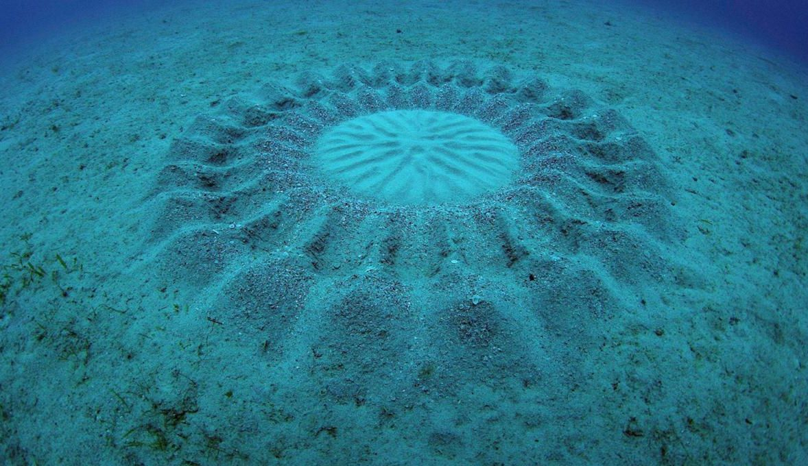 #video of the day | by the Author of the mysterious underwater circles were fish-romantic