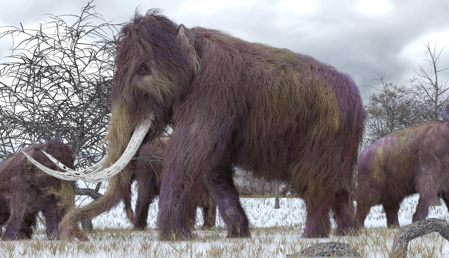 Scientists have renewed the activity of the cells of ancient mammoth