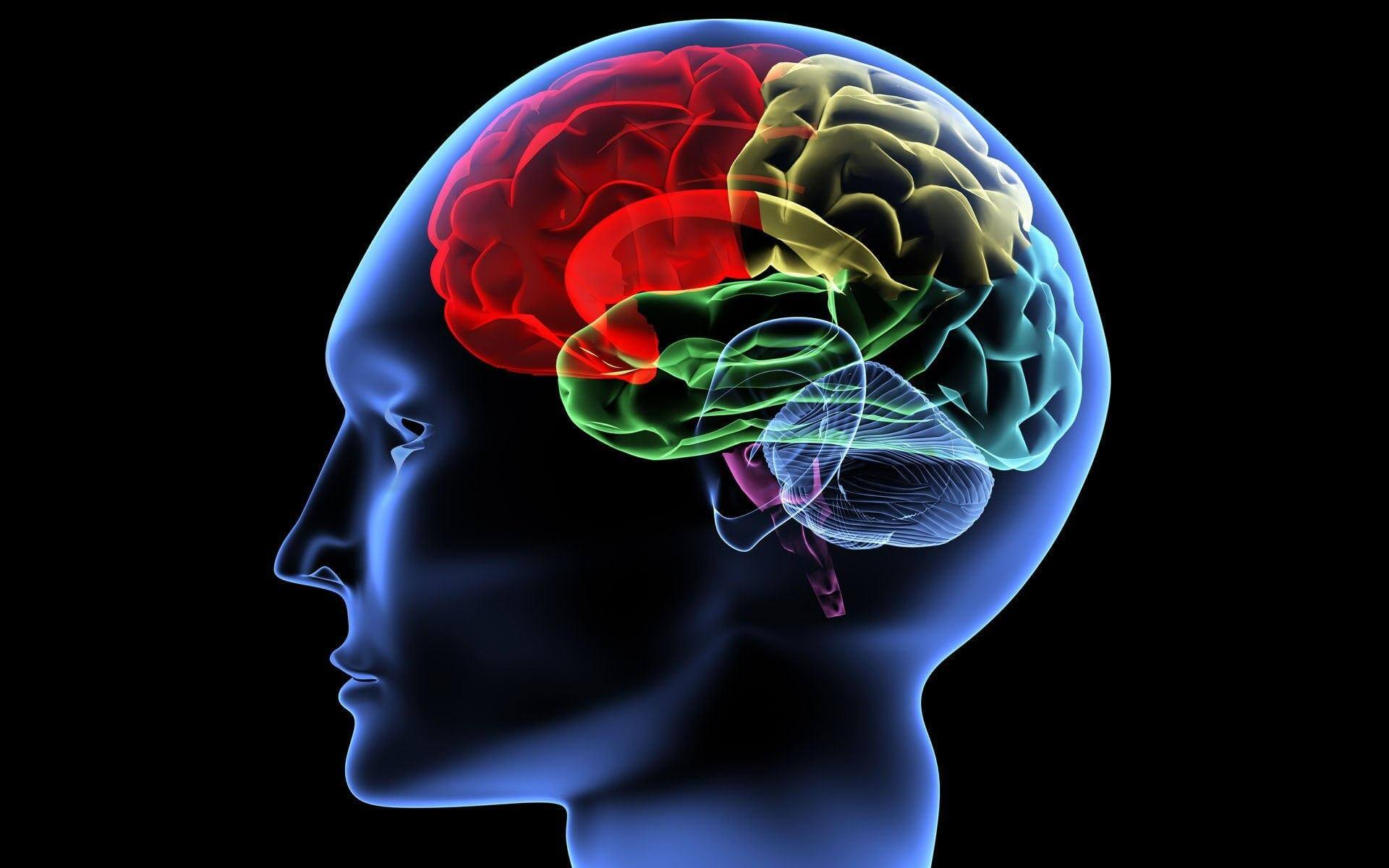 Excessive activity of the brain can significantly reduce life expectancy