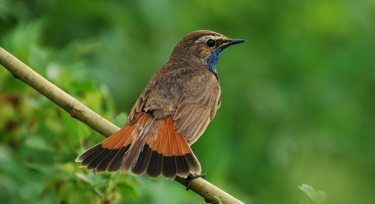 Climate change causes birds to evolve