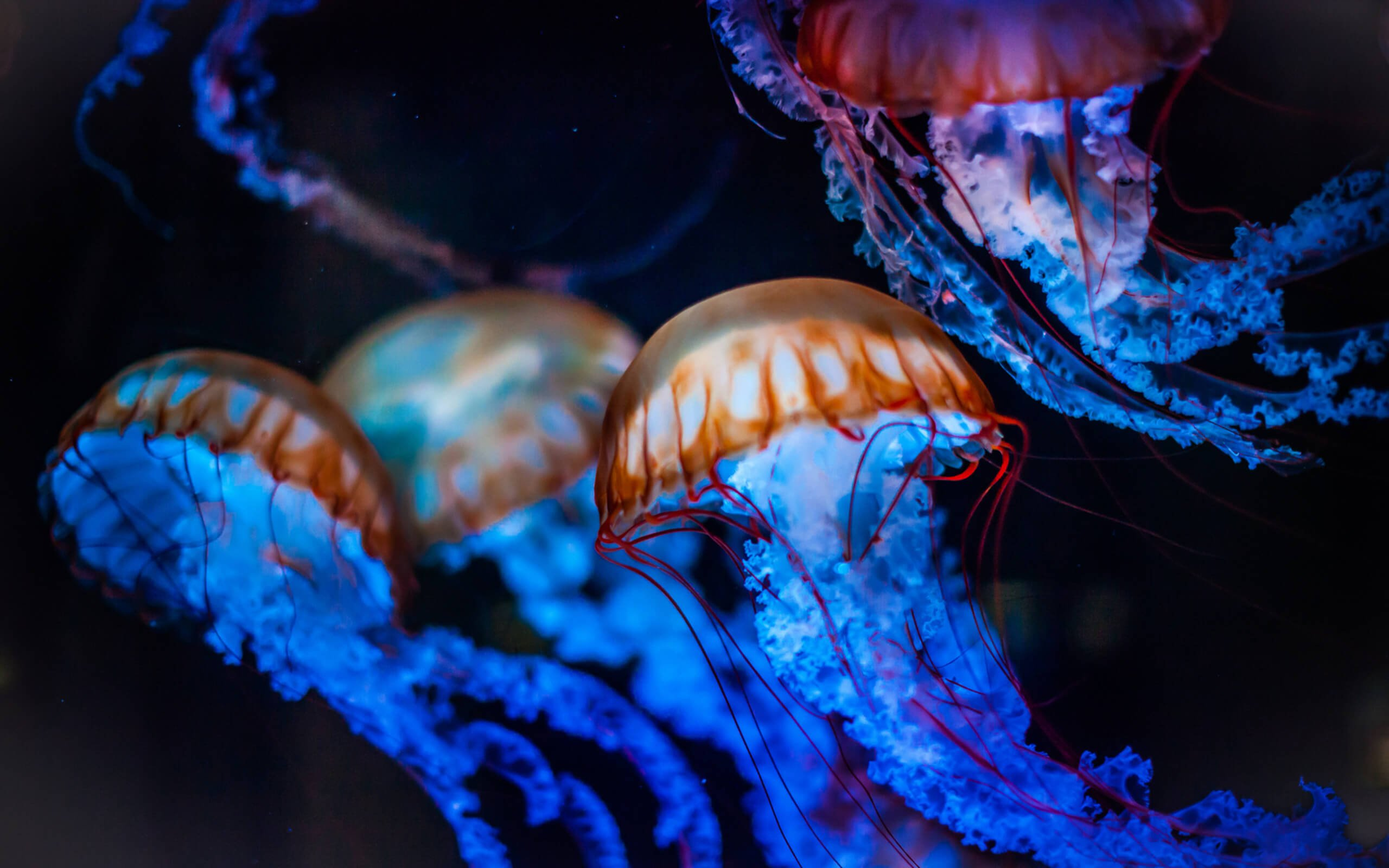 Scientists have learned to control the movements of the jellyfish. But why is it necessary?
