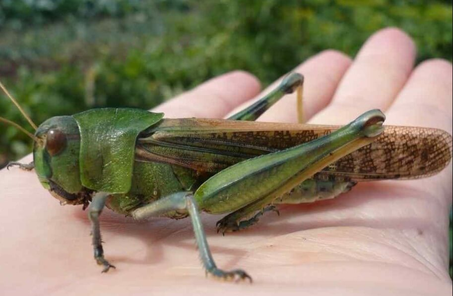 Created insect cyborgs, able to search for explosives