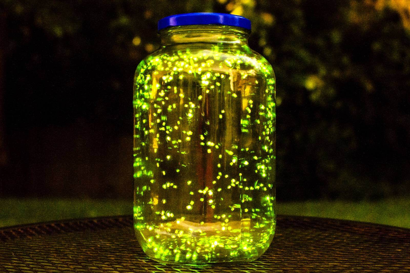 Environmentalists have warned about the possible disappearance of the fireflies