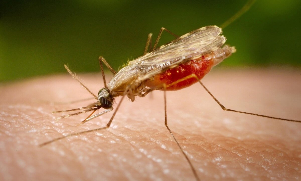 In Russia may increase the number of mosquitoes. What is the reason?