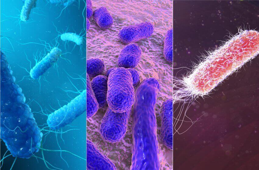 The 5 most dangerous bacteria